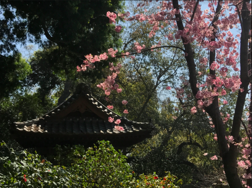 a traditional japanese building stood on the other side connected by a bridge across the water a path wound its way between the trees the flowers